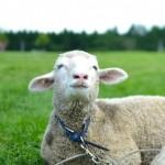 本革グリップ「グリップマスター(The Grip Master)」から、極上の感触、羊革グリップが入荷!
